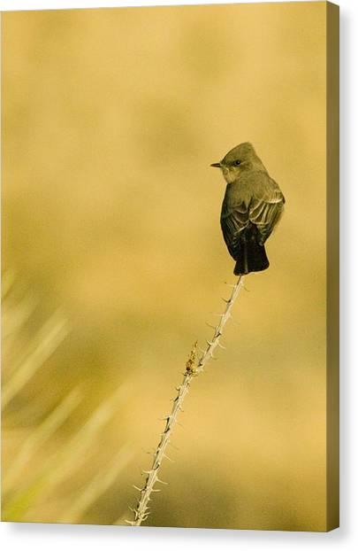 Bird On Ocotillo Canvas Print by Clyde Replogle