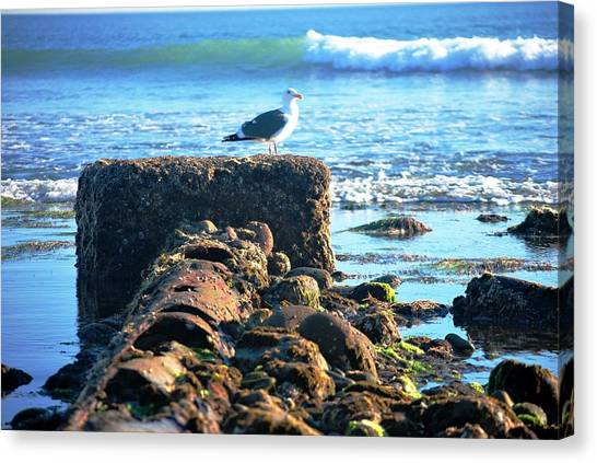 Bird On Perch At Beach Canvas Print