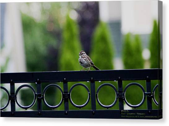 Bird On The Fence Canvas Print