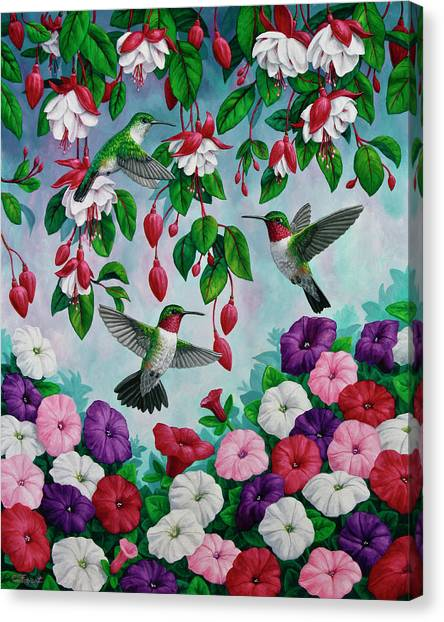 Fuschia Canvas Print - Bird Painting - Hummingbird Heaven by Crista Forest
