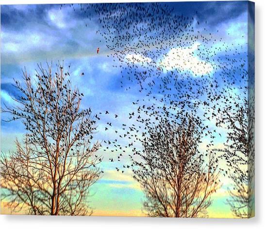 Bird Swarms Versus Hawks On The Prairie Canvas Print