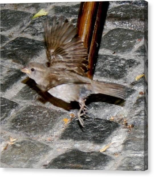Bird Taking Flight Canvas Print by Sara Summers