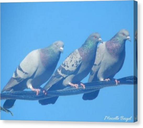Bird Trio Canvas Print