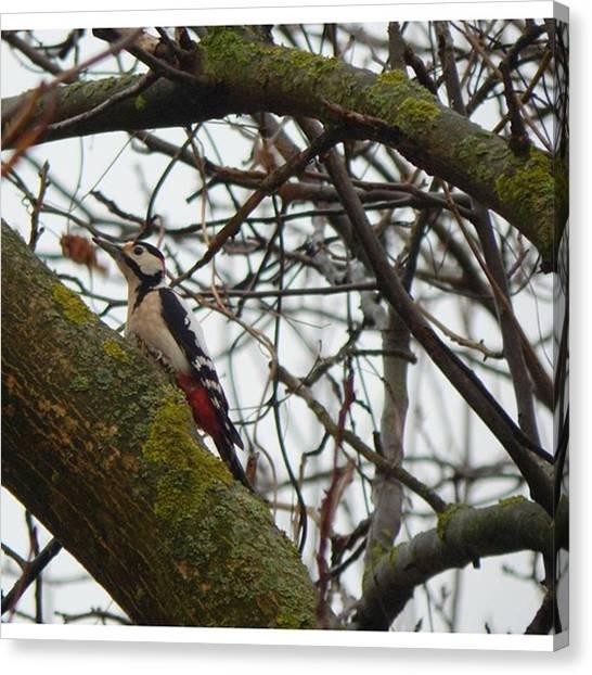 Woodpeckers Canvas Print - #birding #birdwatching #woody by Matej Szabo