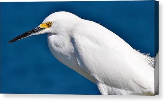 Birds 11 17 Canvas Print