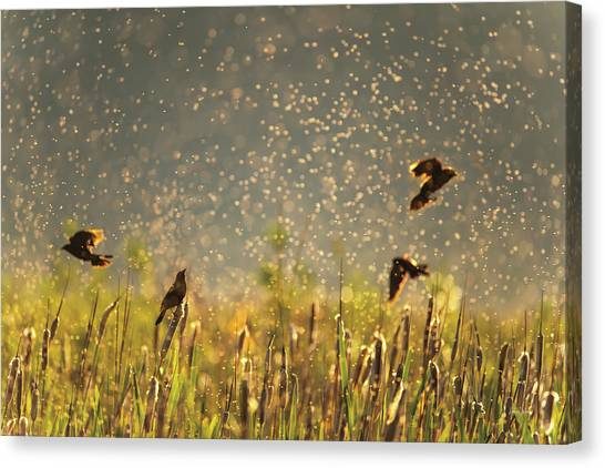 Canvas Print featuring the photograph Birds And Bugs by Leland D Howard