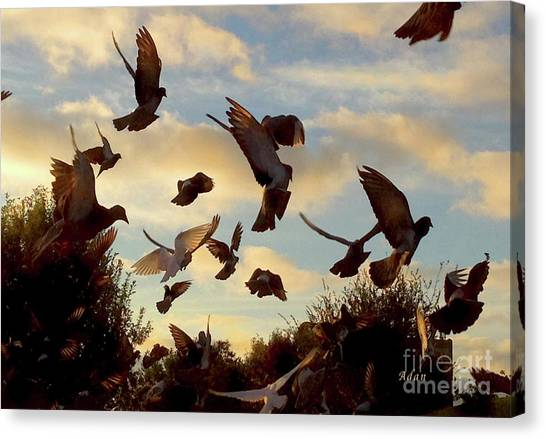 Birds And Fun At Butler Park Austin - Birds 1 Canvas Print