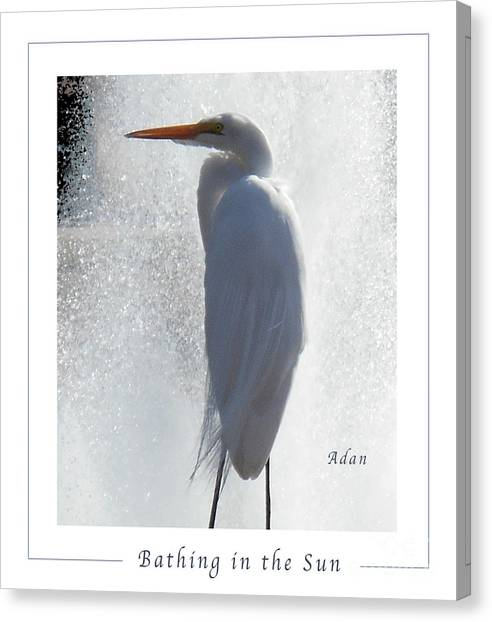 Birds And Fun At Butler Park Austin - Birds 2 Macro Poster Canvas Print