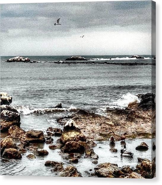 Herons Canvas Print - #birds #birdwatching #beach #siponto by Michele Stuppiello