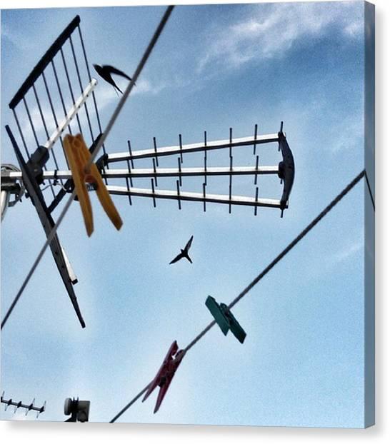 Swallows Canvas Print - #birds #birdwatching #birdoftheday by Michele Stuppiello