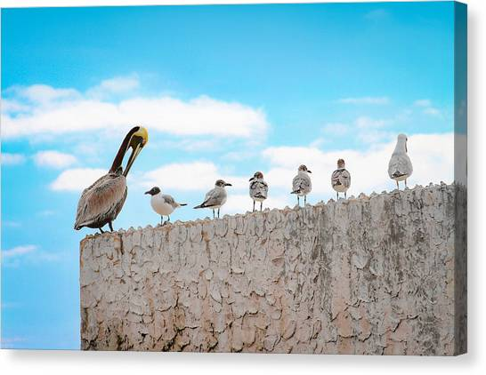 Birds Catching Up On News Canvas Print