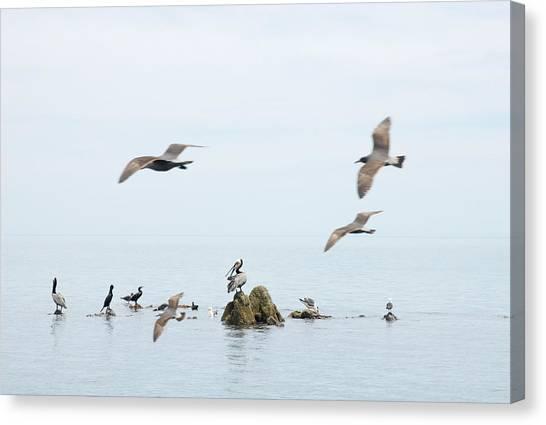 Birds Canvas Print by Elisa Locci