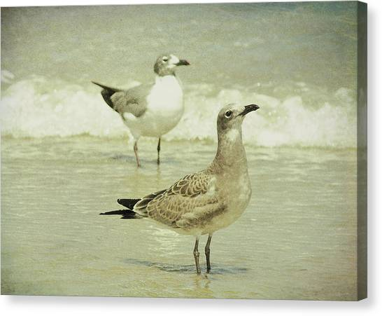Seabirds View Canvas Print by JAMART Photography