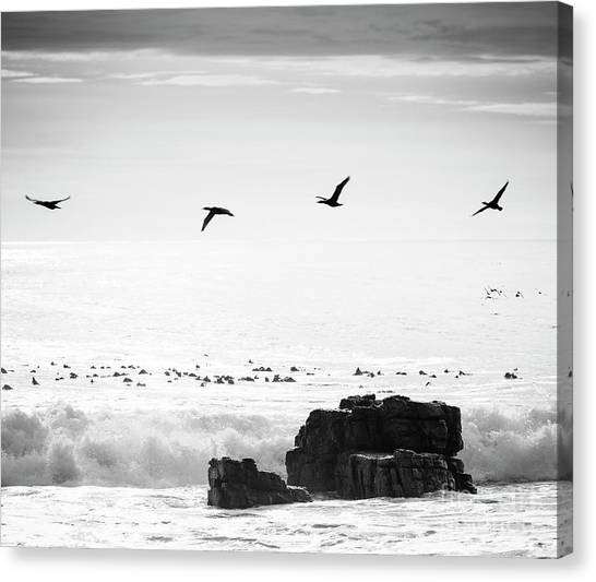 Canvas Print featuring the photograph Birds Flying Over Ocean Black And White by Tim Hester