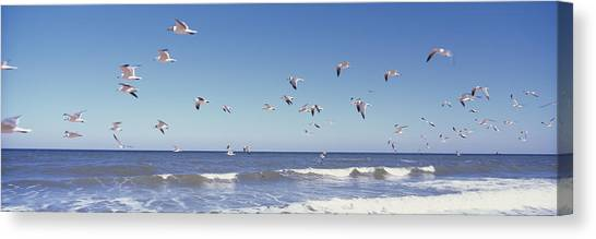 Flagler Beach Canvas Print - Birds Flying Over The Sea, Flagler by Panoramic Images