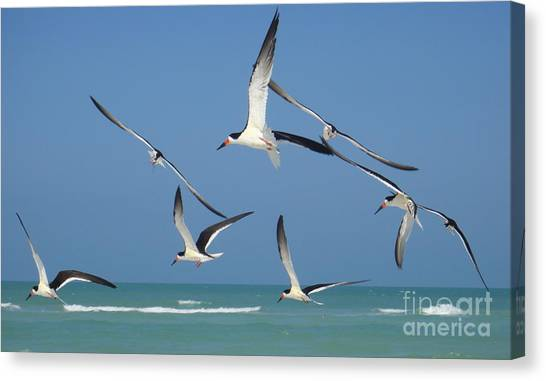 Birds In Paradise Canvas Print by Jan Daniels