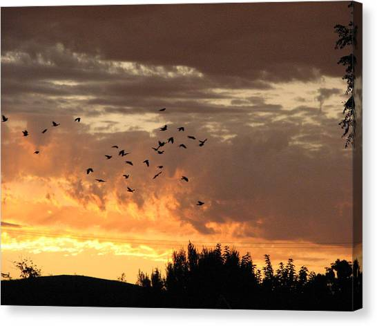 Birds In The Sky Canvas Print by Kathy Roncarati
