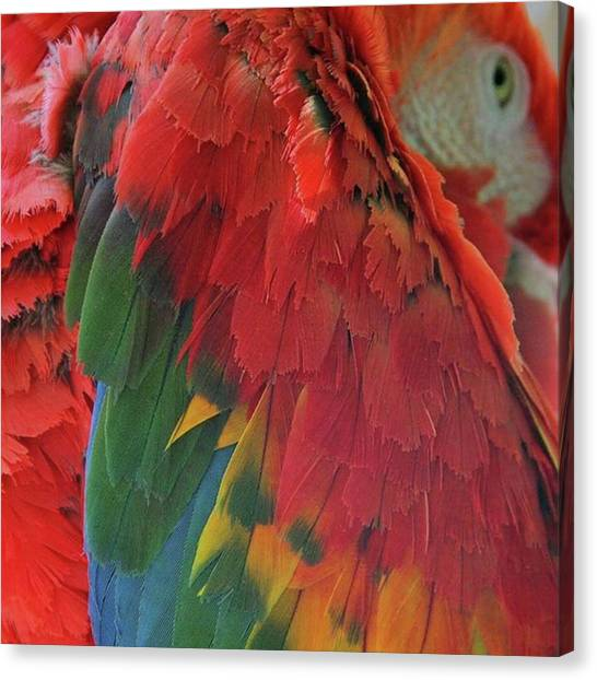 Macaws Canvas Print - Birds Of A Feather! Take by The Texturologist