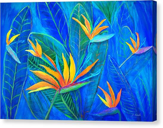 Birds Of Paradise In Florida Canvas Print