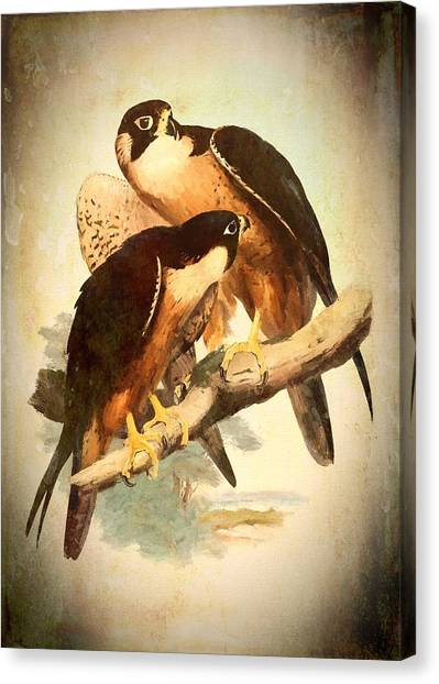 Birds Of Prey 2 Canvas Print