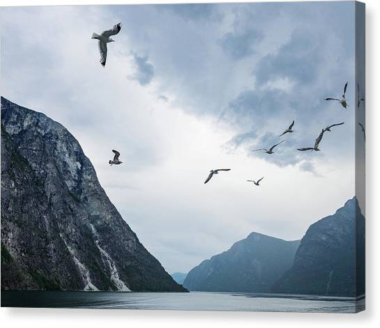 Canvas Print featuring the photograph Birds Of The Fjords Of Norway by Whitney Leigh Carlson