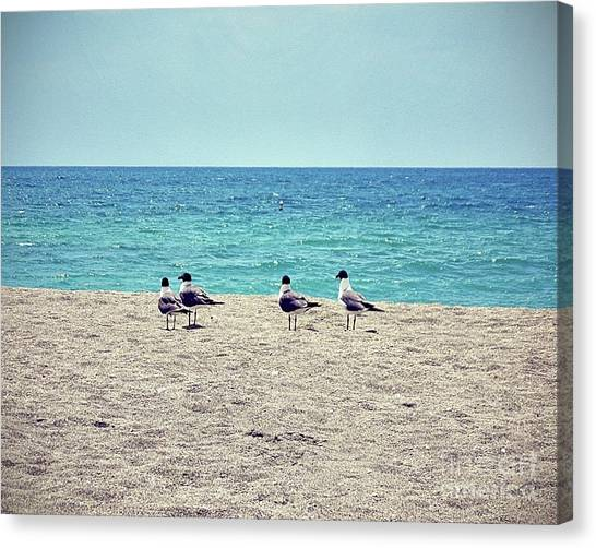 Island .oasis Canvas Print - Birds On A Beach by Chris Andruskiewicz