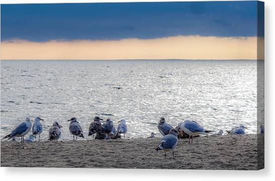 Birds On A Beach Canvas Print