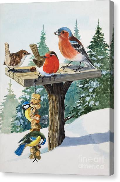 Blue Tit Canvas Print - Birds On A Bird Table by English School
