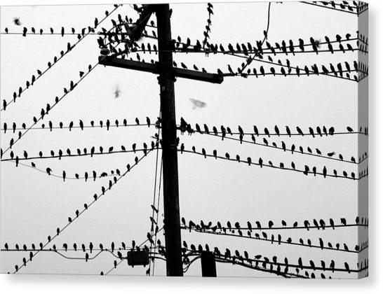 Birds On A Wire Canvas Print by Don Prioleau