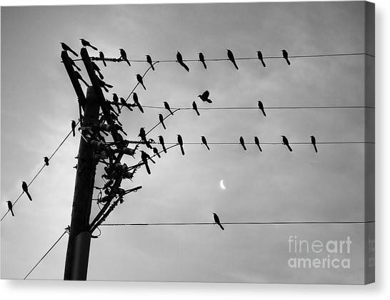 Birds On A Wire Canvas Print by Lionel Martinez