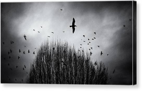 Birds Over Bush Canvas Print