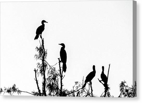 Birds Perched On Branches Canvas Print