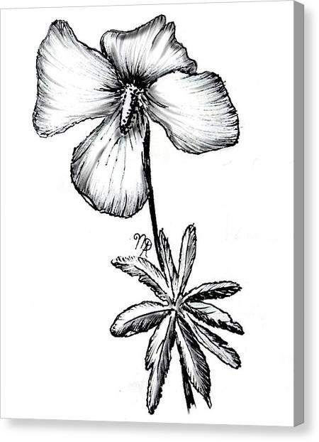 Birdsfoot Violet Canvas Print