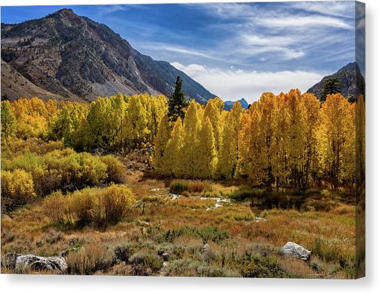 Bishop Creek Aspen Canvas Print