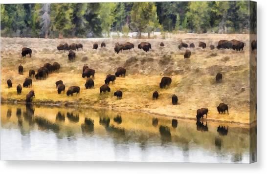 Bison At Indian Pond Canvas Print