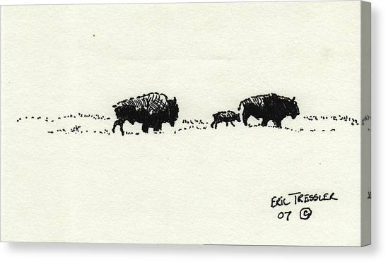 Bison Family Canvas Print