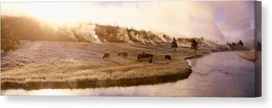 Wy Canvas Print - Bison Firehole River Yellowstone by Panoramic Images