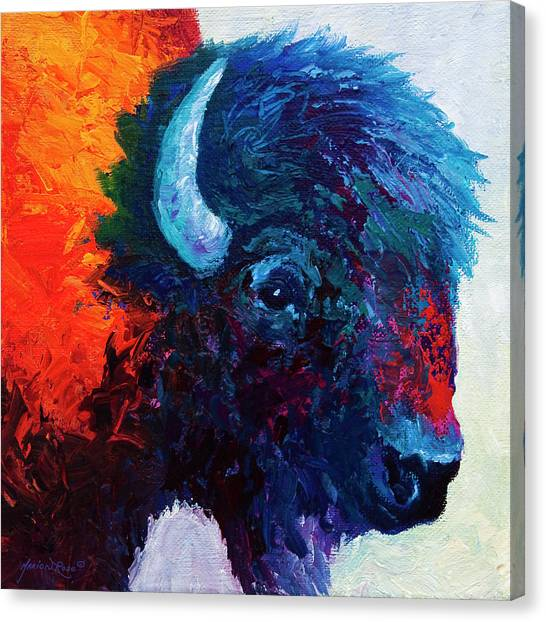 Study Canvas Print - Bison Head Color Study I by Marion Rose