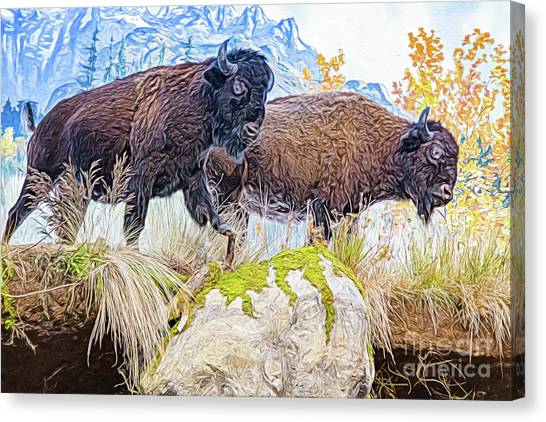 Canvas Print featuring the digital art Bison Pair by Ray Shiu