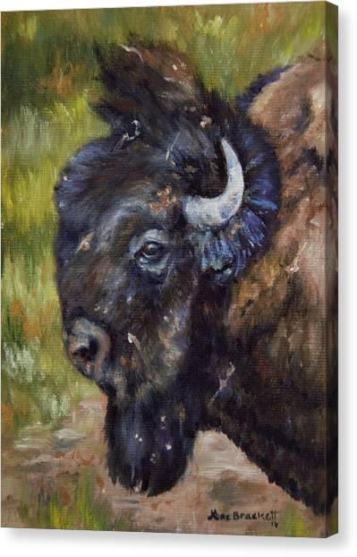 Bison Study 5 Canvas Print