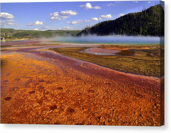 Bison Tracks In The Grand Prismatic Spring Canvas Print by Patrick  Flynn