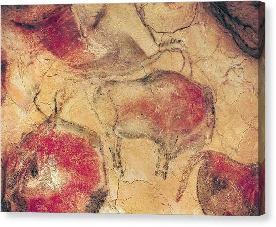 Caverns Canvas Print - Bisons From The Caves At Altamira by Prehistoric