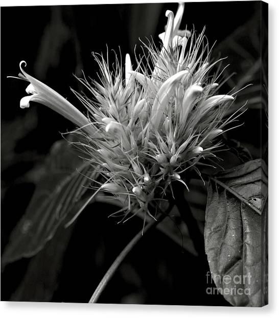 Bizarre Flower Charm Canvas Print
