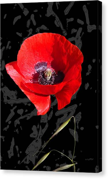 Black And Red Poppy Canvas Print by Martine Affre Eisenlohr