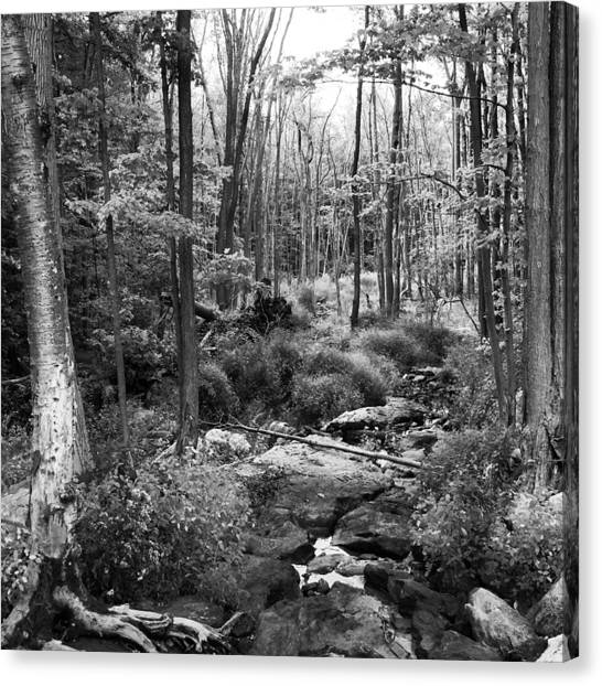 Black And White Babbling Brook Canvas Print