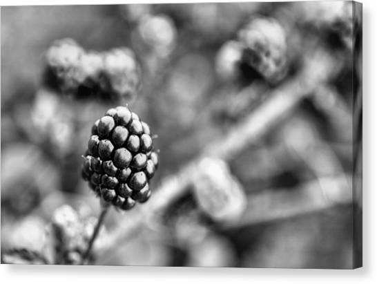 Wild Berries Canvas Print - Black And White Blackberry by JC Findley