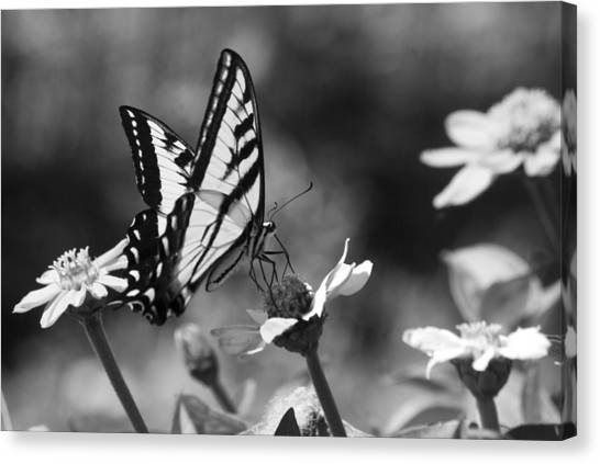 Black And White Butterfly On Flower Canvas Print