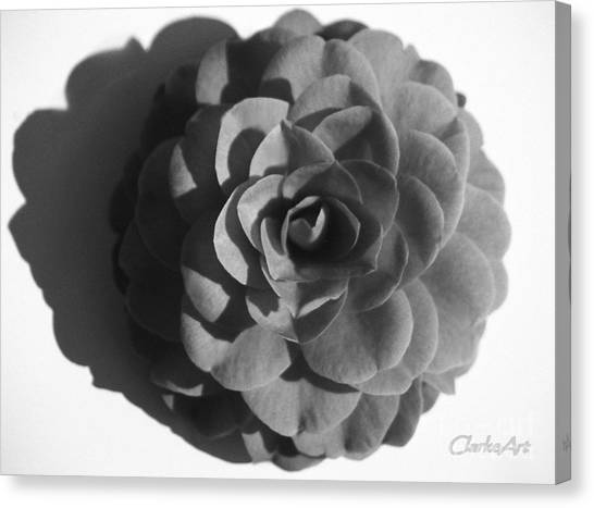 Camellia In Black And White Canvas Print