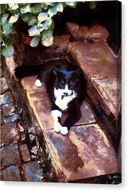 Black And White Cat Resting Regally Canvas Print