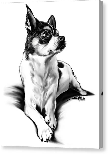 Black And White Chihuahua By Spano Canvas Print